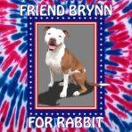 A Vote for Brynn